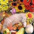 Di Milo - Flower Child - Kitty Cat Kitten Sleeping In Fall Autumn Harvest by Chantal PhotoPix