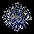 Diatoms, Light Micrograph by Frank Fox
