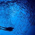 Diver And A Large School Of Bigeye by Steve Jones