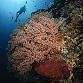 Diver Over Soft Coral Seascape by Todd Winner