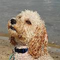 Dog 99 by Joyce StJames
