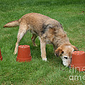 Dog Playing by Mark Taylor