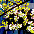 Dogwood Blossoms by Ulrich Lange