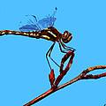 Dragonfly Art by Ben Upham III