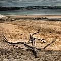 Driftwood 2 by Steve Purnell