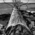 Driftwood by Jakub Sisak