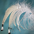 Droopy Feather by Jean Noren