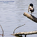 Duck On A Log by Mick Anderson