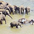 Elephant Bath by Paul Cowan