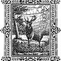 Elk From Glass by Howard Belz
