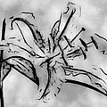 Exotic Lily In Black And White by Jill Balsam