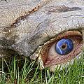 Eye Of A Dinosaur Lightning by James BO Insogna