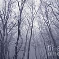 Fairy Tale Forest by Zoya S