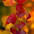 Fall Color 1 by Dan Wells