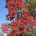 Fall Colors by Denise Ellis