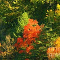 Fall Colors by Kathleen Struckle