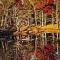 Fall Forest Reflections by Elena Elisseeva