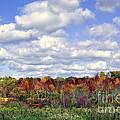 Fall In Wisconsin by Dyana Rzentkowski