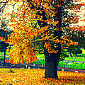 Fall by Priscilla De Mesa