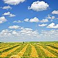 Farm Field At Harvest In Saskatchewan by Elena Elisseeva