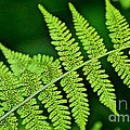 Fern Seed by Sharon Elliott