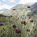 Field Of Flowers In Rural Landscape by Stefano Gilera