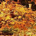 Fire Bush by Rod Ismay