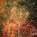 Fireworks by Juan  Silva