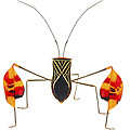 Flagfooted Bug Barbilla Np Costa Rica by Piotr Naskrecki