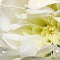 Fleur Blanche by Sylvie Leandre