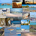Florida Collage by Betsy Knapp