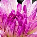 Flower 11 by Burney Lieberman