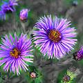 Flower Patterns by Steve McKinzie