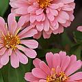 Flowers by Megan Cohen