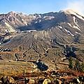 Flowers On Mount St. Helens by Athena Mckinzie