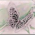 Flutter by Debra     Vatalaro