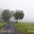 Foggy Landscape by Michal Boubin
