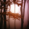 Foggy Misty Trees by Mike Nellums