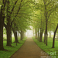 Foggy Park by Elena Elisseeva