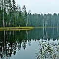 Forest Lake by Michael Goyberg