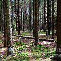 Forest by Mats Silvan