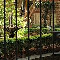 Garden Gate by Carol Ann Thomas