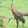 Garden Visitors by Carol Groenen