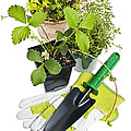 Gardening Tools And Plants by Elena Elisseeva