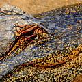 Gator by Patrick  Short