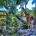 George The Giraffe by Elinor Mavor