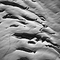 Glacier Tracks by Alasdair Turner