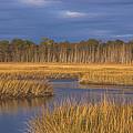 Golden Marsh by Tom Singleton