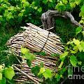 Grape Vines  by Gaspar Avila