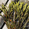 Green Fleece Seaweed by Ted Kinsman